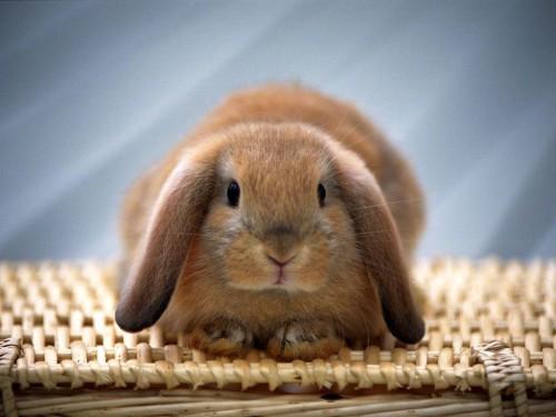 Кролик сидит на плетёной сеточке