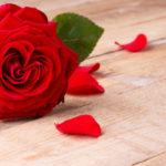 Выращивание роз в открытом грунте как бизнес