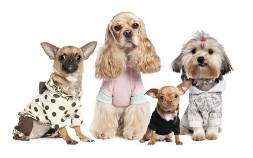 Собаки одетые в одежду