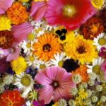 Как открыть цветочный магазин с нуля + готовый бизнес-план с расчетами
