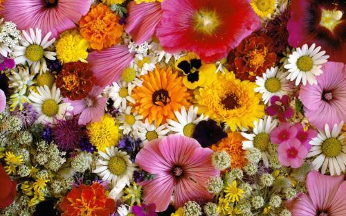 Разные красивые цветы, в том числе полевые