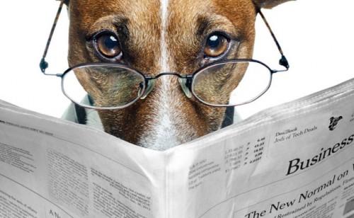 Собака в очках читает газету