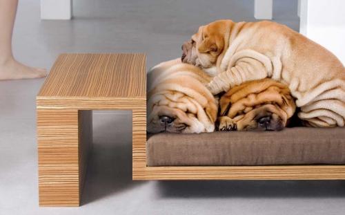 Собаки лежат на мебели
