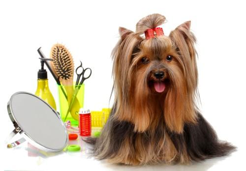 Собака и инструменты для груминга