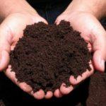 Как правильно организовать производство биогумуса в домашних условиях