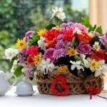 Открываем бизнес в сфере комнатных растений