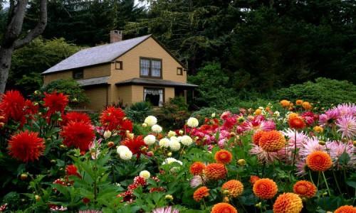 Дача с огородом, в котором растут красивые цветы