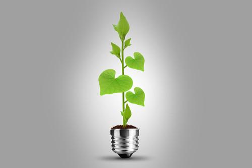 Из цоколя лампочки растёт росток зелени