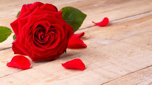 Красивая красная роза лежит на деревянном столе