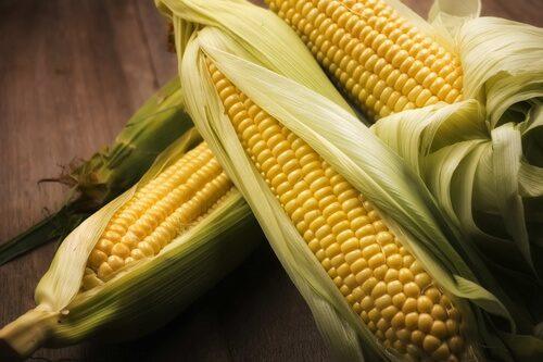 Созревшие початки кукурузы лежат на столе